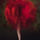 Vladimir Morozov - 'Poppy' - Wexford Camera ClubHonourable Mention - Projected - Advanced
