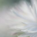 Niamh Whitty - 'Whisper' - Cork Camera GroupHonourable Mention - Print - Advanced