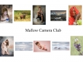 3rd Colour Panel - Mallow Camera Club