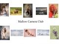3rd Colour Panel - Mallow Camera Club