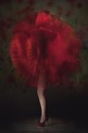 Best colour print - Vladimir Morozov with Poppy from Wexford Camera Club.jpg