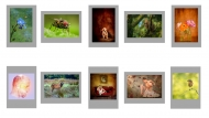 Third Colour Print Panel  - Blarney Photography Club